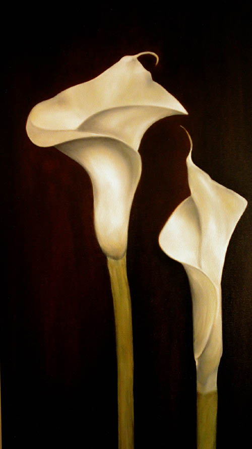 Two Cala Lilies set against a dark brown background